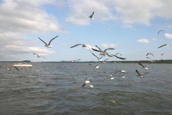 Gulf Shores, AL 2008 082