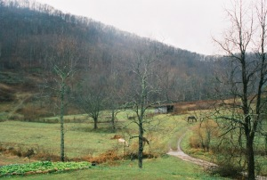 kentucky-landscape-with-horses-at-snug-hollow