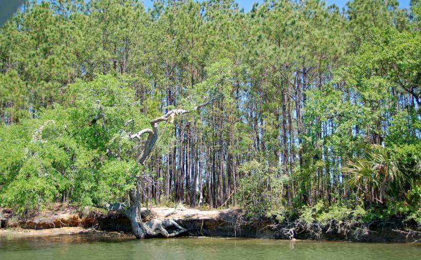 On Golden Pond – My Golden Pond! Have You MissedMe?