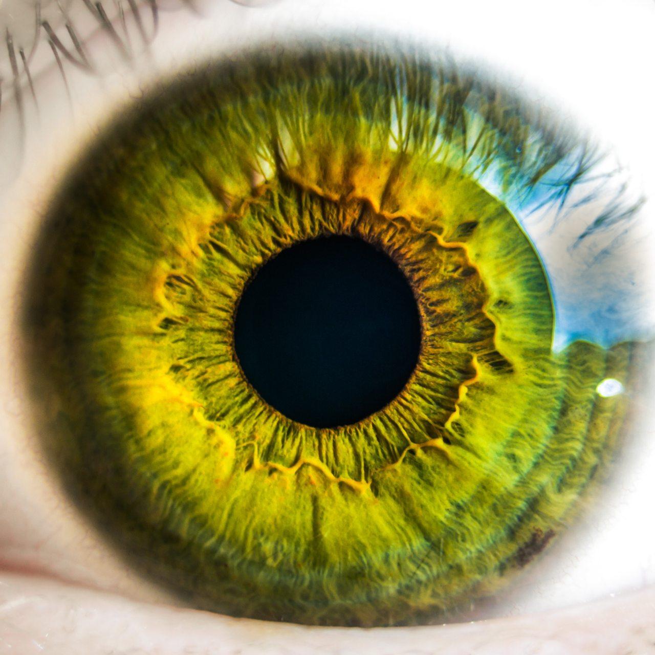 anatomy-biology-eye-8588 (1)