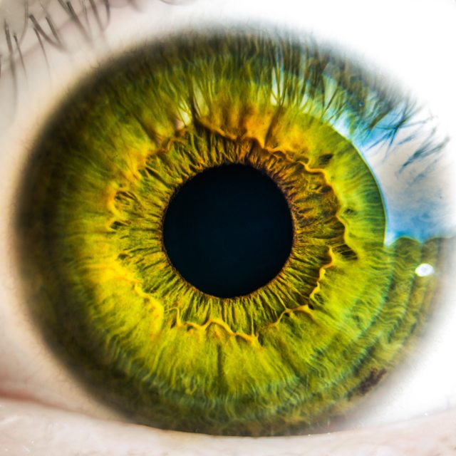 anatomy-biology-eye-8588 (1)